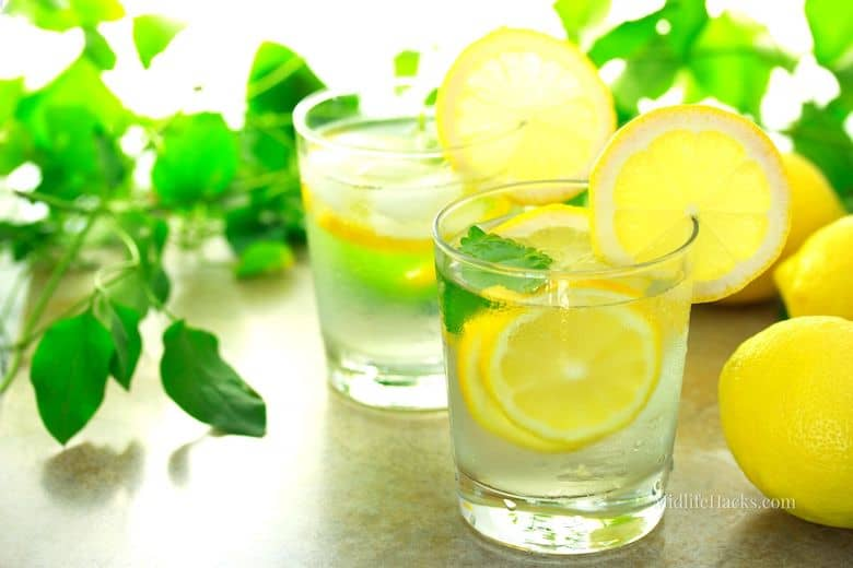 2 glasses of water with fresh lemon slices